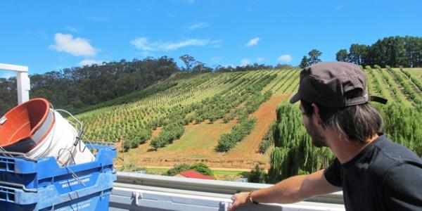 Farm job australia