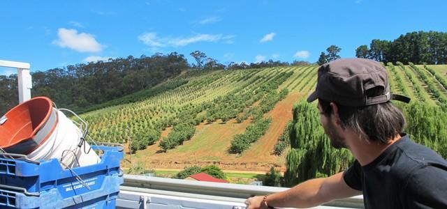 Fruit Picking in Australia