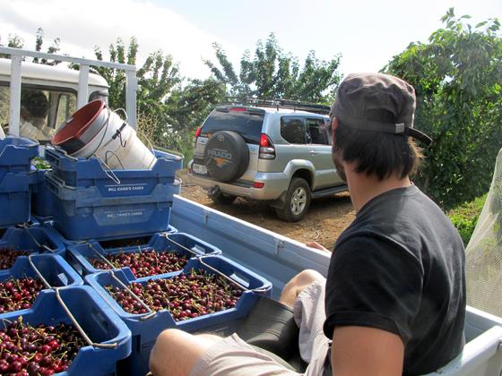 7_Fruit Picking Adelaide