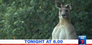 Kangaroo news