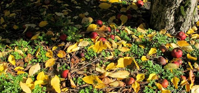 fruit picking crop seasons australia roadtrip