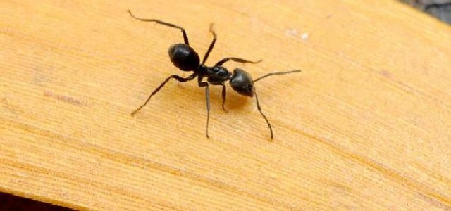 A man survived in the Australian Outback eating ants