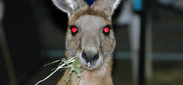 20 good reasons for not coming to Australia
