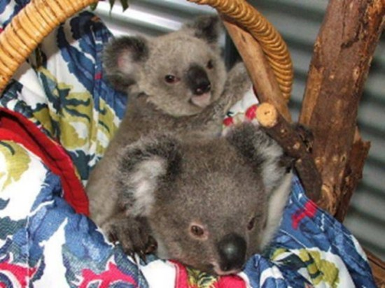 koala stories_3_6