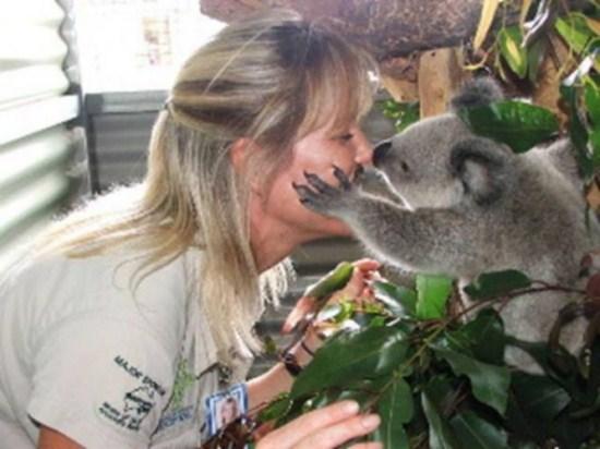 koala stories_twins