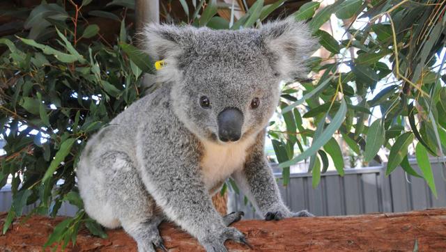 4_East Coast Australia