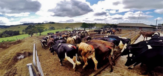 88 Days of Working on a Dairy Farm