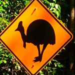 8 Safety Tips for Driving in Australia