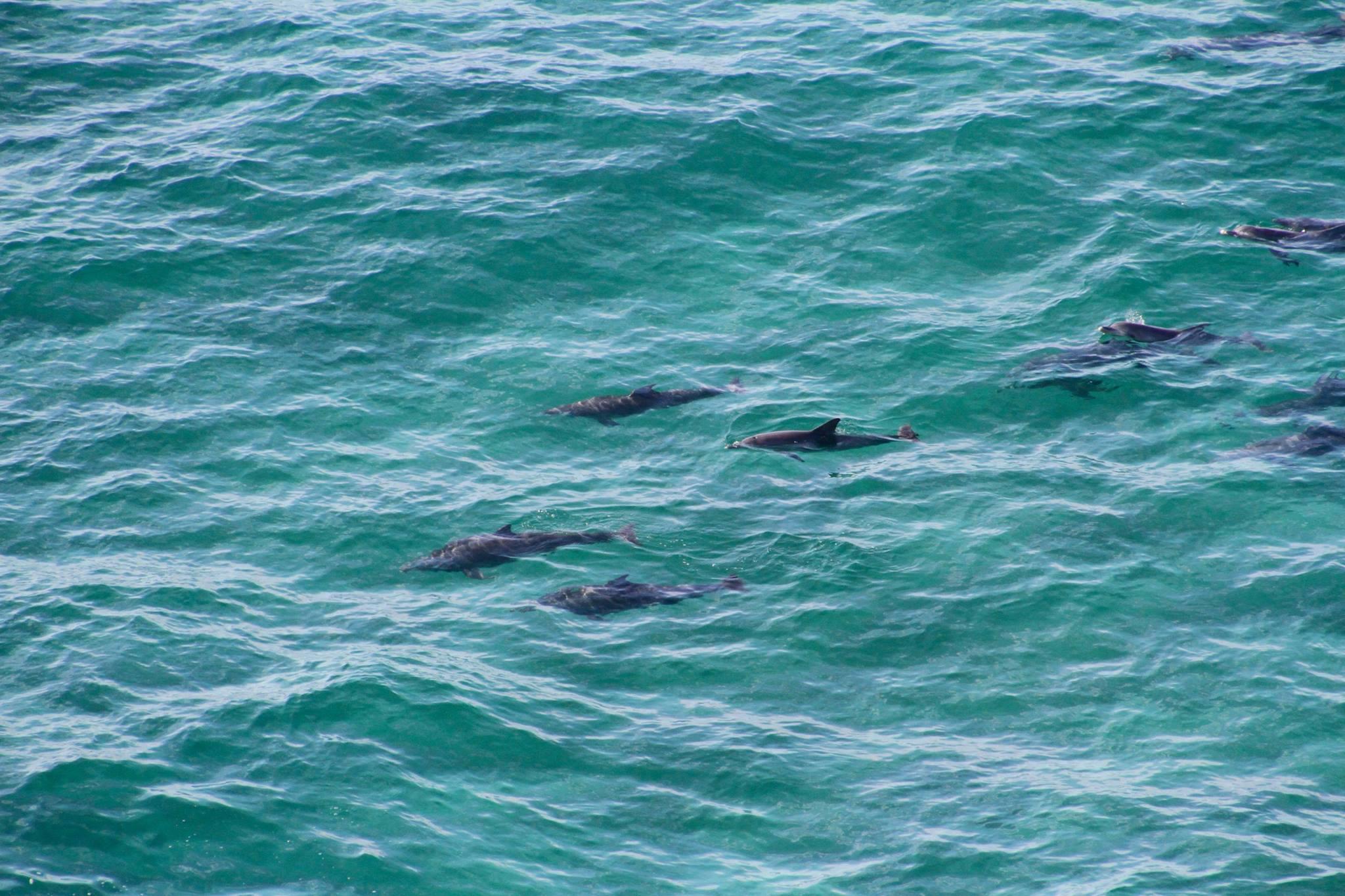 byron bay lifestyle dolphins