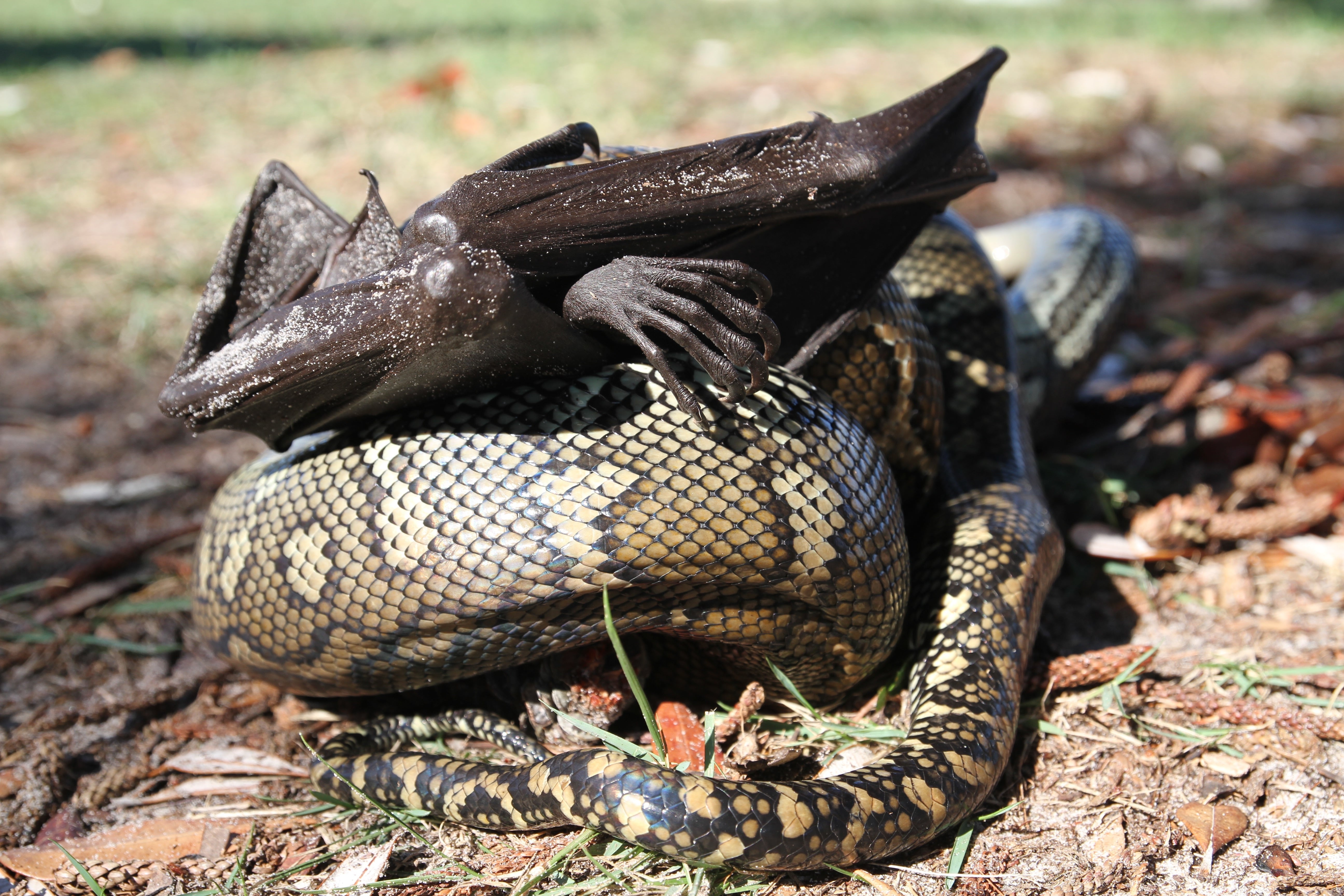 byron bay lifestyle python