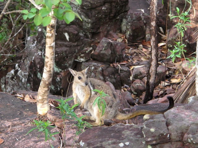 litchfield national park 3