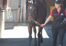 horse jobs in Australia
