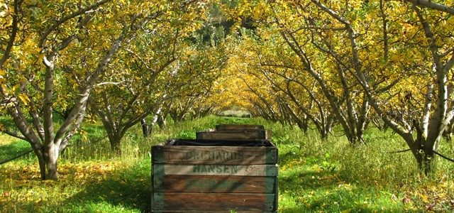 Fruit Picking in Australia: Scams and Advice