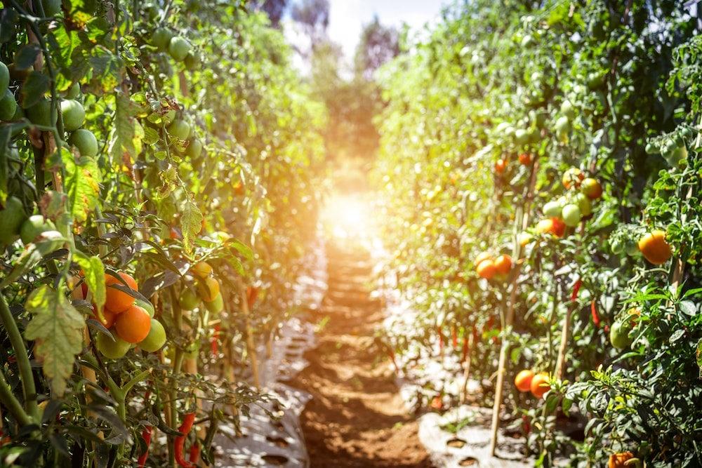 fruit picking job australia