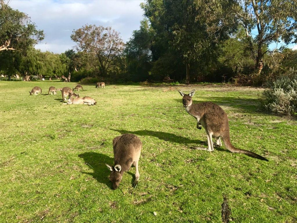 trip to australia 7