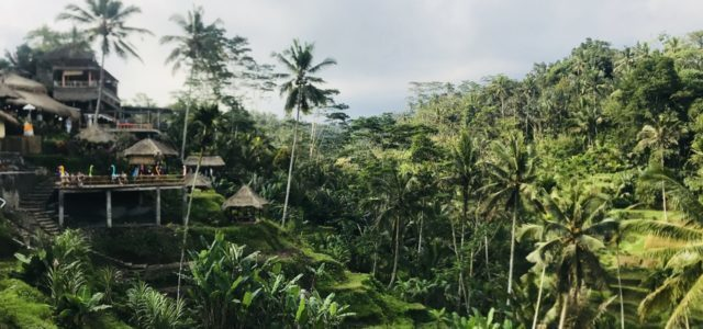 Ubud in Bali – Best things to do