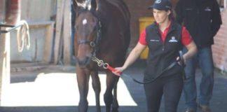 horse stables Australia