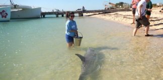 working with dolphins