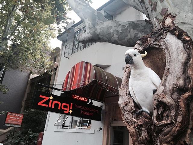 best hostels in Sydney Zing